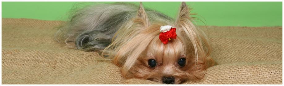 ブリーダーが愛情込めて育てた仔犬・子猫専門のペットショップ Miliトップ画像4